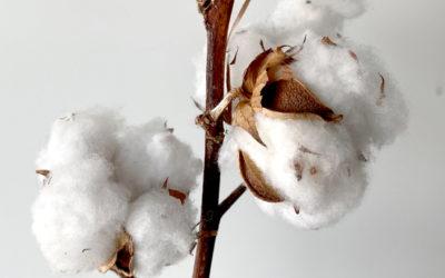 Matières premières agricoles: le coton, une ressource qui a la cote